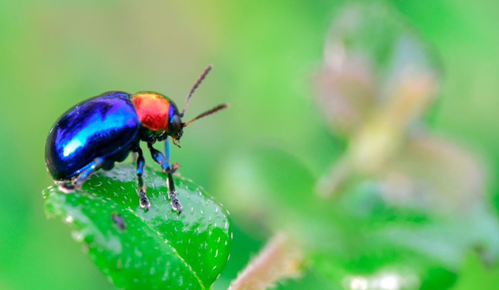 como-acabar-com-os-insetos-e-animais-peçonhentos-em-seu-condominio-1080x628